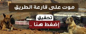 موت على قارعة الطريق.. سم محرم دوليا في شوارع مصر (تحقيق)